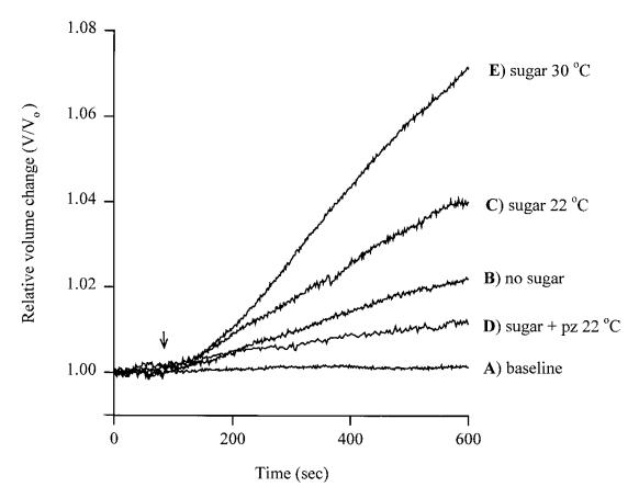 圖1. SGLT足量糖份的補充在(C)22度C以上可以有顯著的水分補充效應。(E)30度以上更是明顯。
